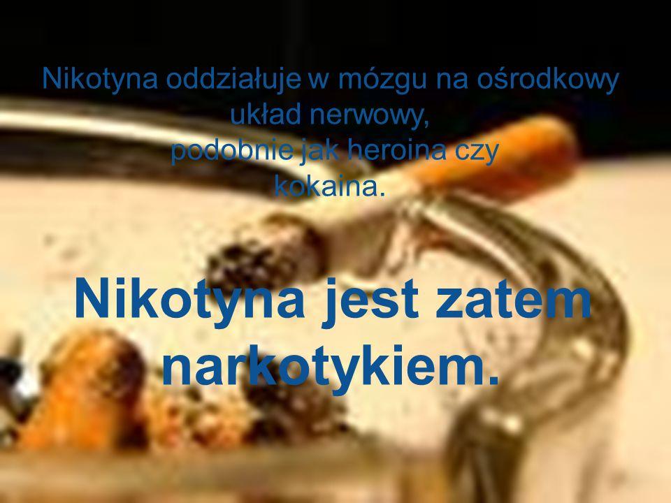 Nikotyna oddziałuje w mózgu na ośrodkowy układ nerwowy,