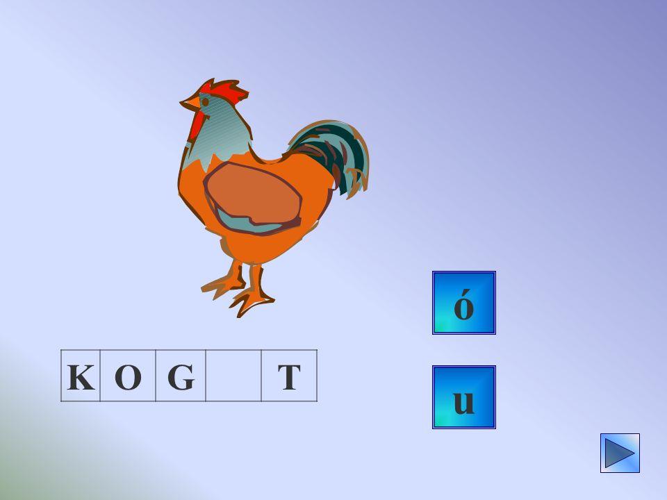ó K O G T u