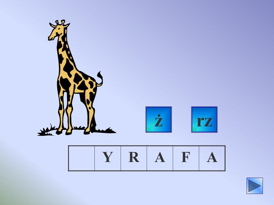 ż rz Y R A F