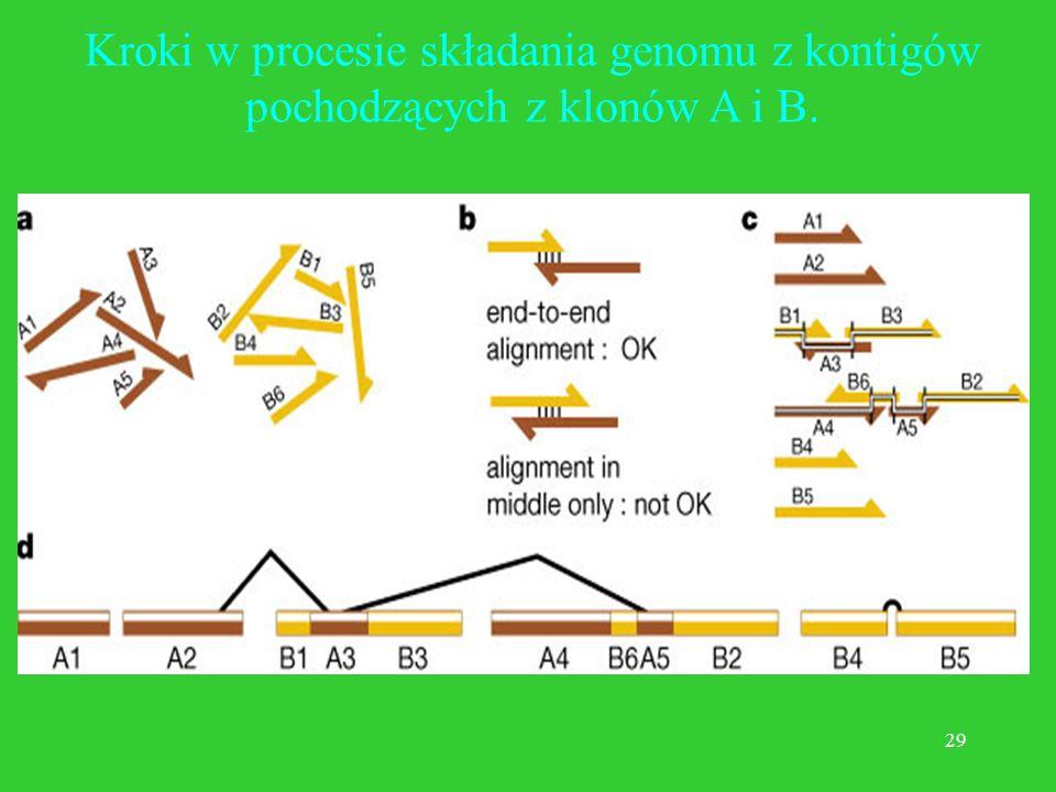 Kroki w procesie składania genomu z kontigów pochodzących z klonów A i B.