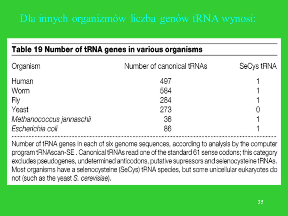 Dla innych organizmów liczba genów tRNA wynosi: