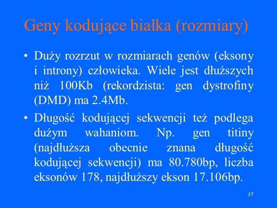 Geny kodujące białka (rozmiary)