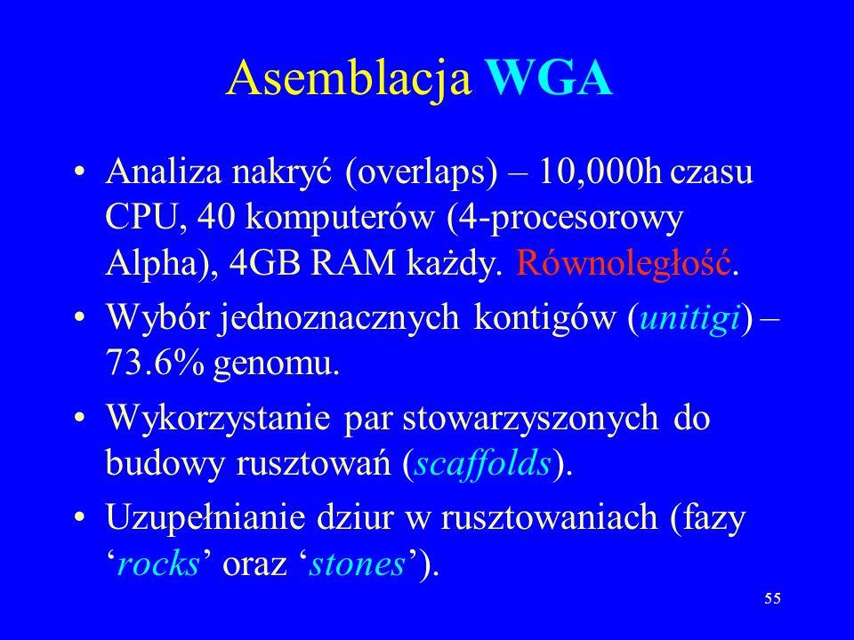 Asemblacja WGA Analiza nakryć (overlaps) – 10,000h czasu CPU, 40 komputerów (4-procesorowy Alpha), 4GB RAM każdy. Równoległość.