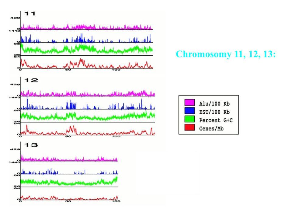 Chromosomy 11, 12, 13: Korelacja gęstości genów Z innymi wielkościami