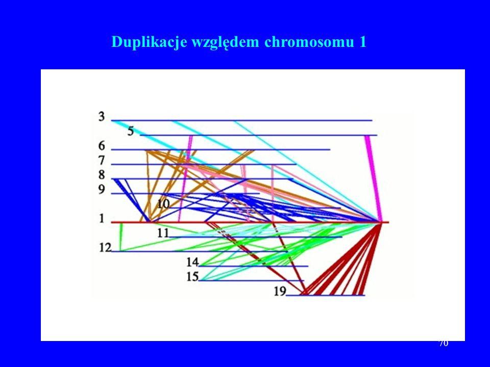 Duplikacje względem chromosomu 1
