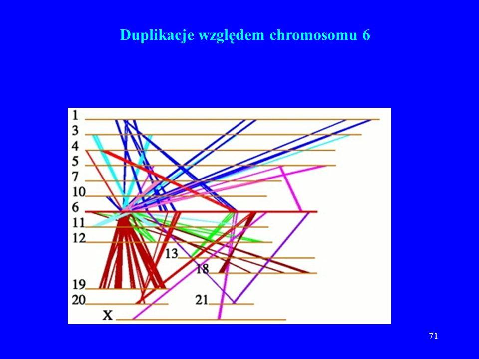 Duplikacje względem chromosomu 6