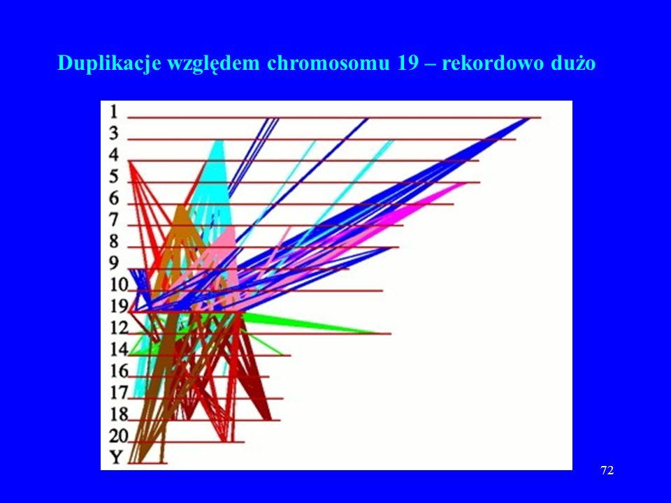 Duplikacje względem chromosomu 19 – rekordowo dużo