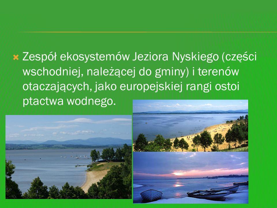 Zespół ekosystemów Jeziora Nyskiego (części wschodniej, należącej do gminy) i terenów otaczających, jako europejskiej rangi ostoi ptactwa wodnego.