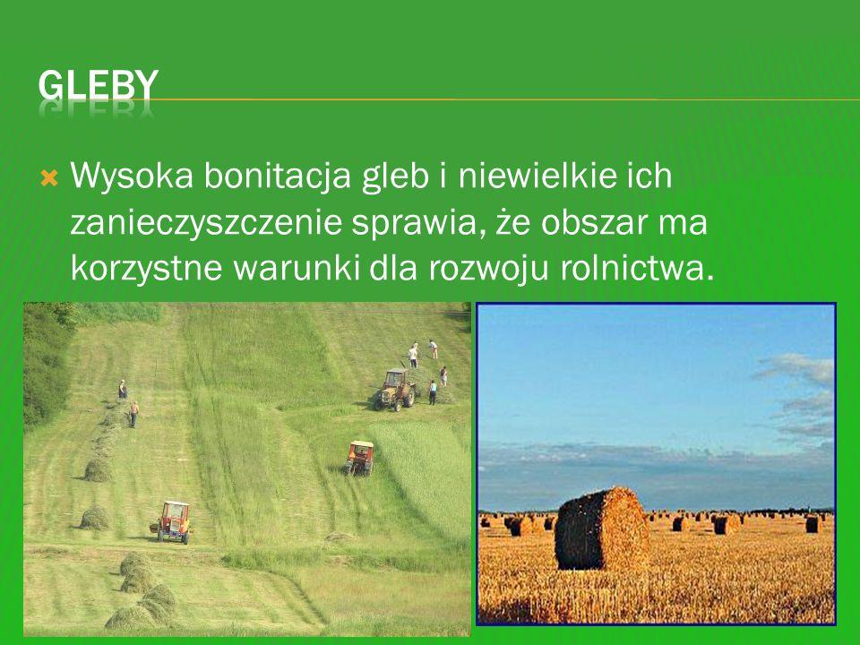 Gleby Wysoka bonitacja gleb i niewielkie ich zanieczyszczenie sprawia, że obszar ma korzystne warunki dla rozwoju rolnictwa.