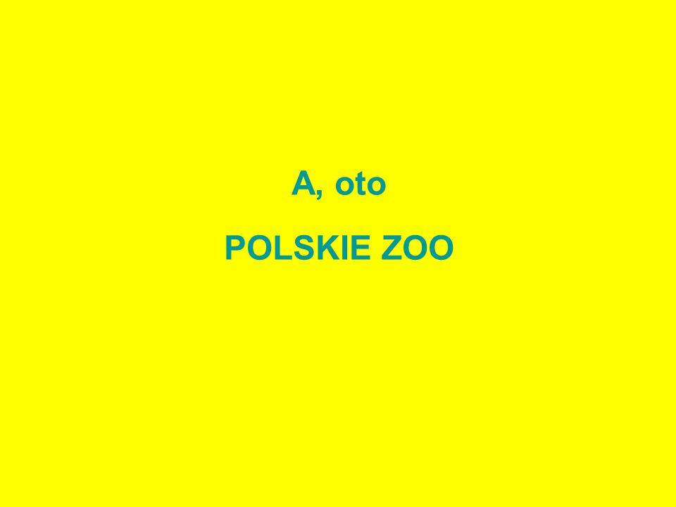 A, oto POLSKIE ZOO