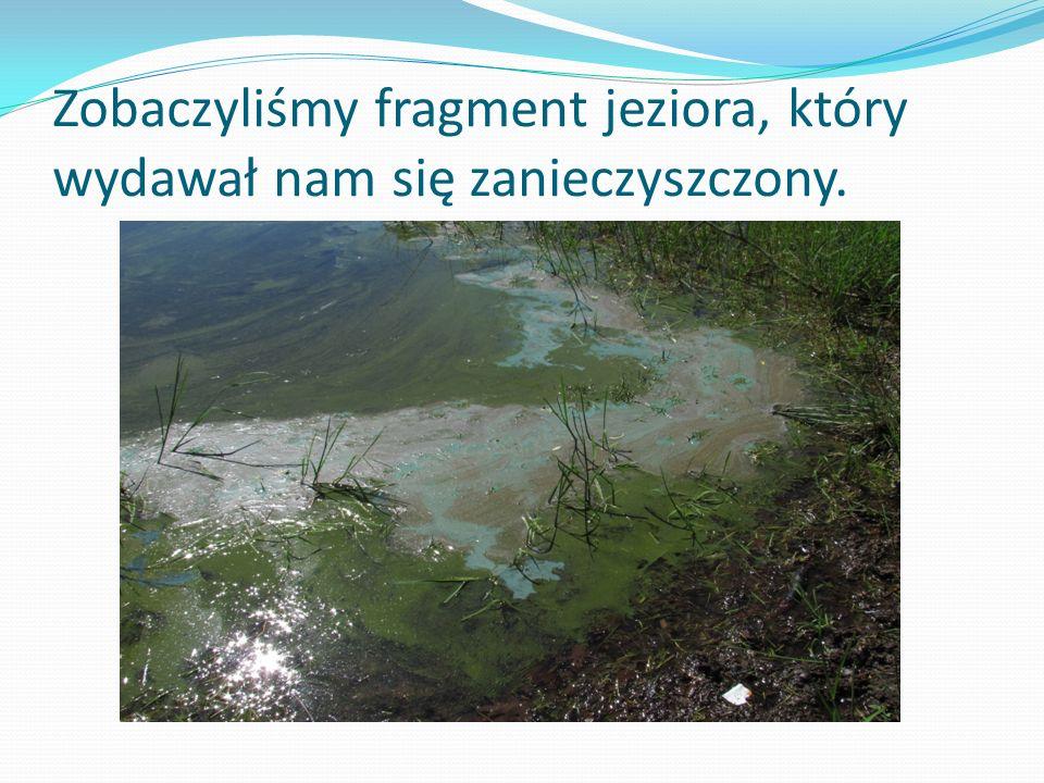 Zobaczyliśmy fragment jeziora, który wydawał nam się zanieczyszczony.