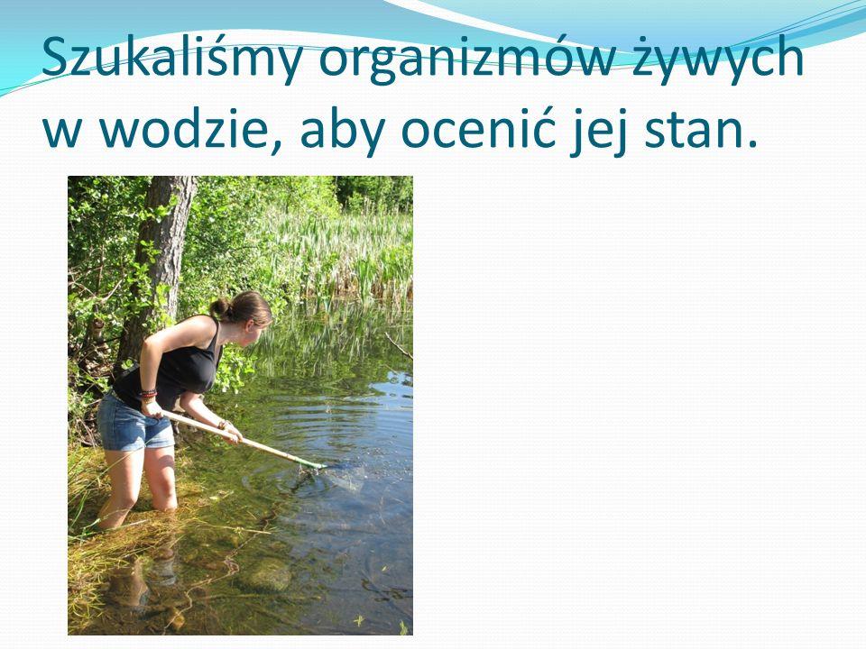 Szukaliśmy organizmów żywych w wodzie, aby ocenić jej stan.