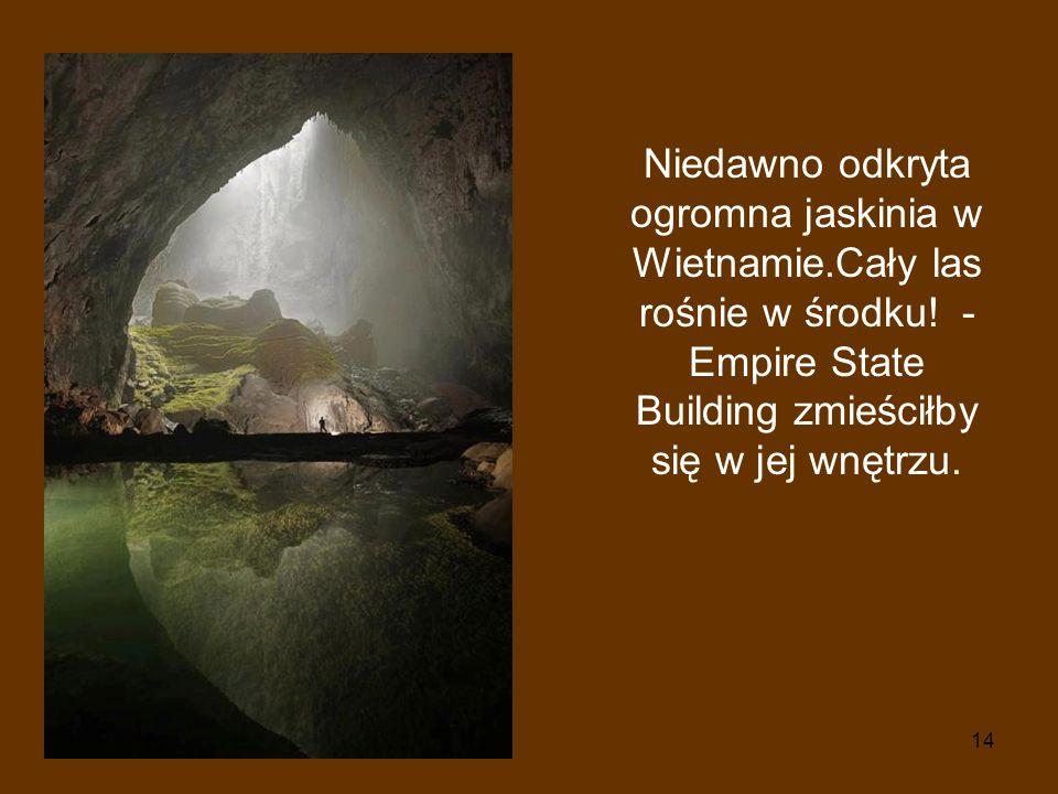 Niedawno odkryta ogromna jaskinia w Wietnamie.Cały las rośnie w środku.