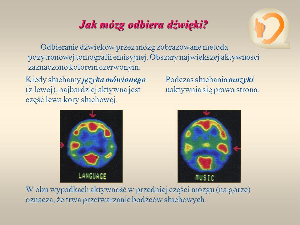 Jak mózg odbiera dźwięki