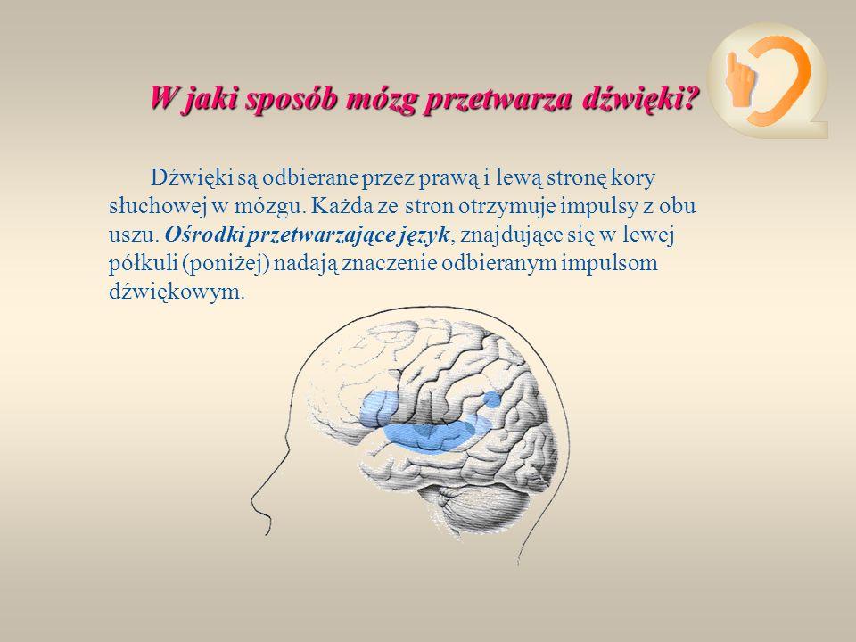 W jaki sposób mózg przetwarza dźwięki