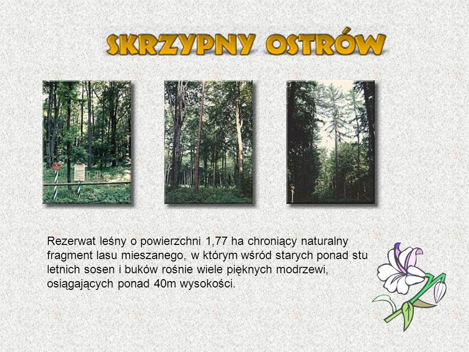 Rezerwat leśny o powierzchni 1,77 ha chroniący naturalny fragment lasu mieszanego, w którym wśród starych ponad stu letnich sosen i buków rośnie wiele pięknych modrzewi, osiągających ponad 40m wysokości.