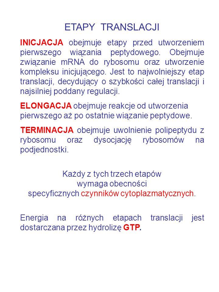 ETAPY TRANSLACJI