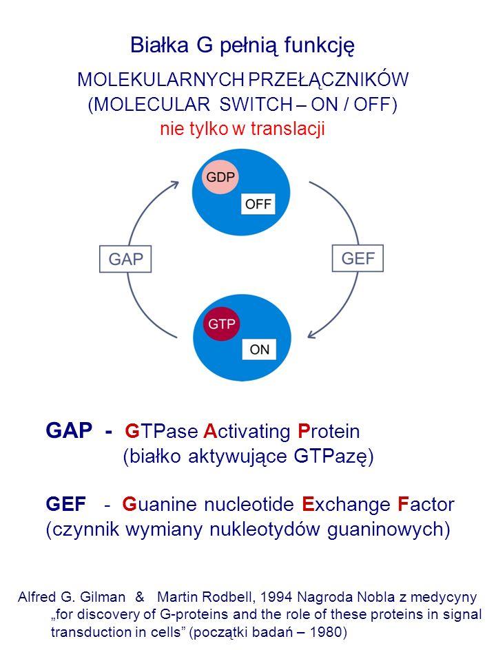 Białka G pełnią funkcję
