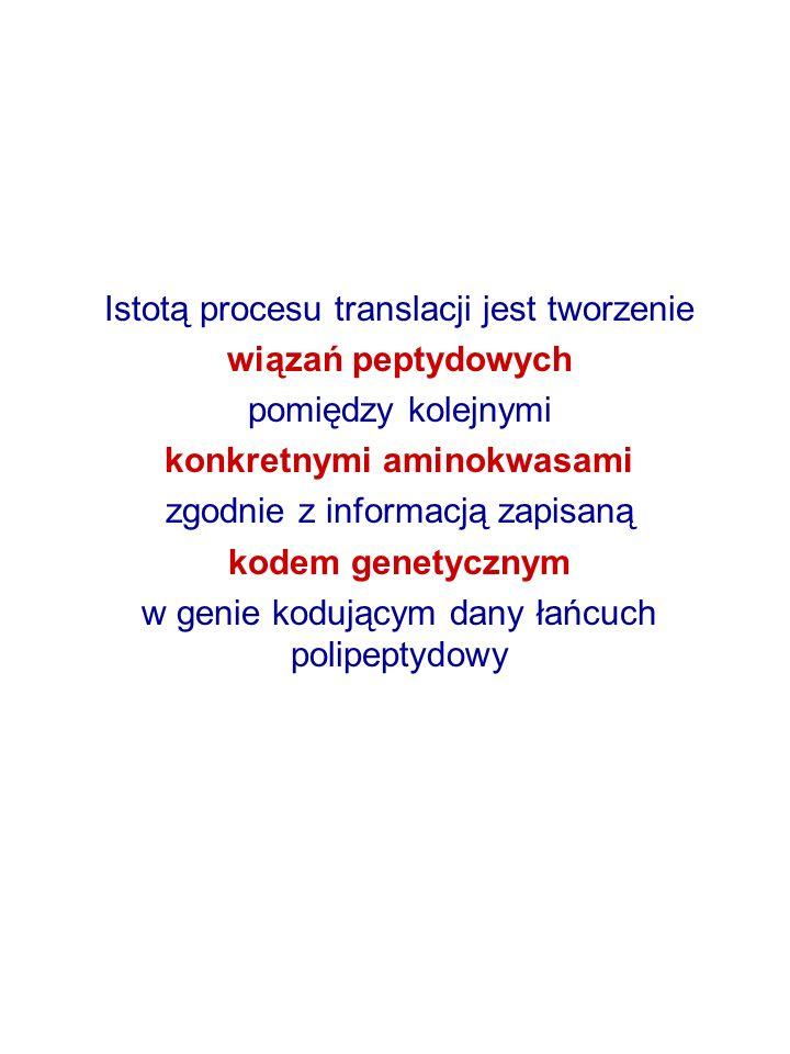 Istotą procesu translacji jest tworzenie wiązań peptydowych