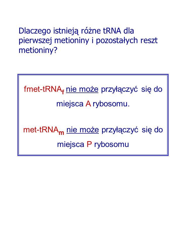 fmet-tRNAf nie może przyłączyć się do miejsca A rybosomu.