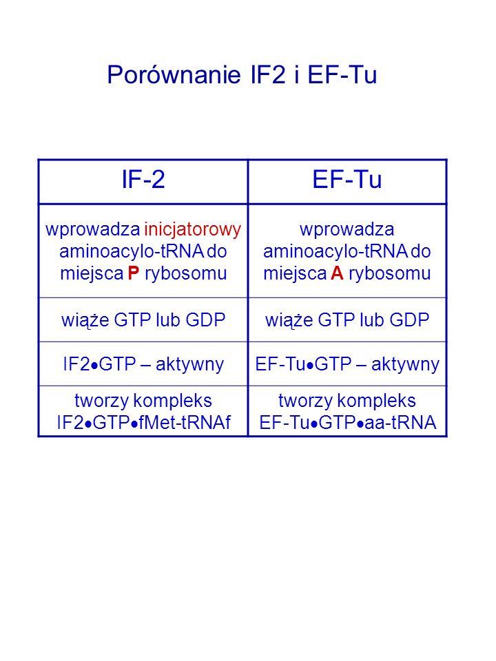 Porównanie IF2 i EF-Tu IF-2 EF-Tu