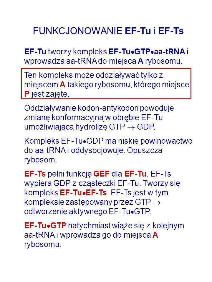 FUNKCJONOWANIE EF-Tu i EF-Ts