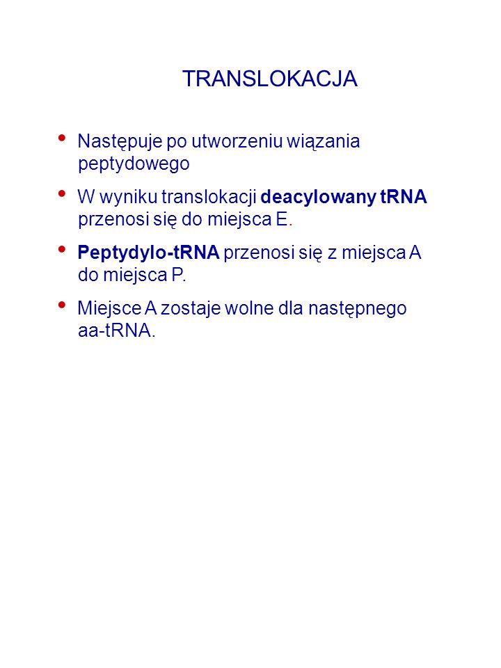 TRANSLOKACJA Następuje po utworzeniu wiązania peptydowego