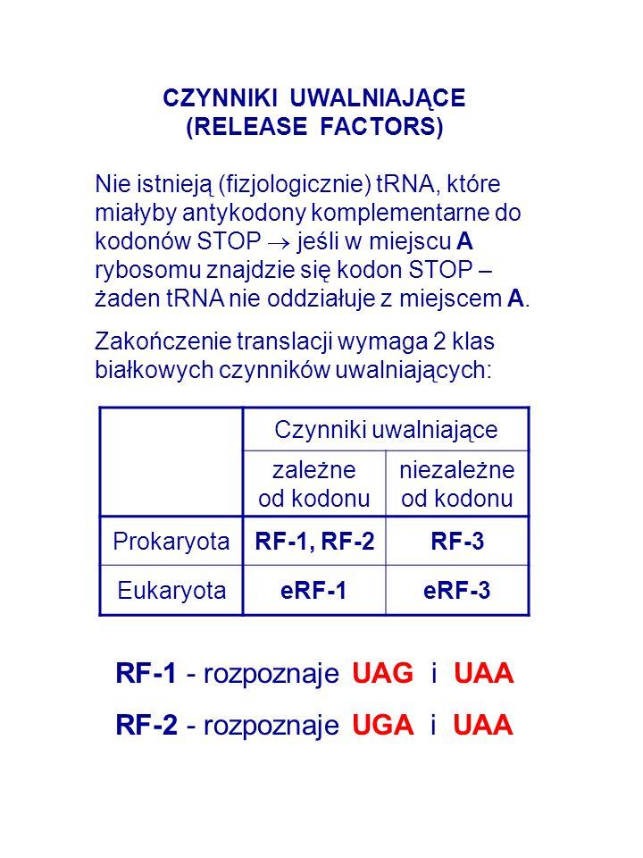 RF-1 - rozpoznaje UAG i UAA RF-2 - rozpoznaje UGA i UAA