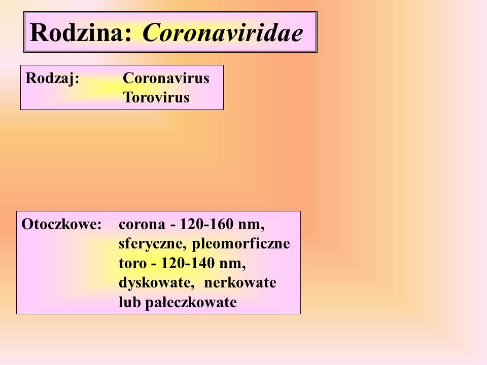 Rodzina: Coronaviridae