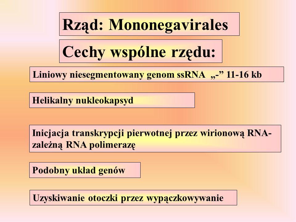 Rząd: Mononegavirales