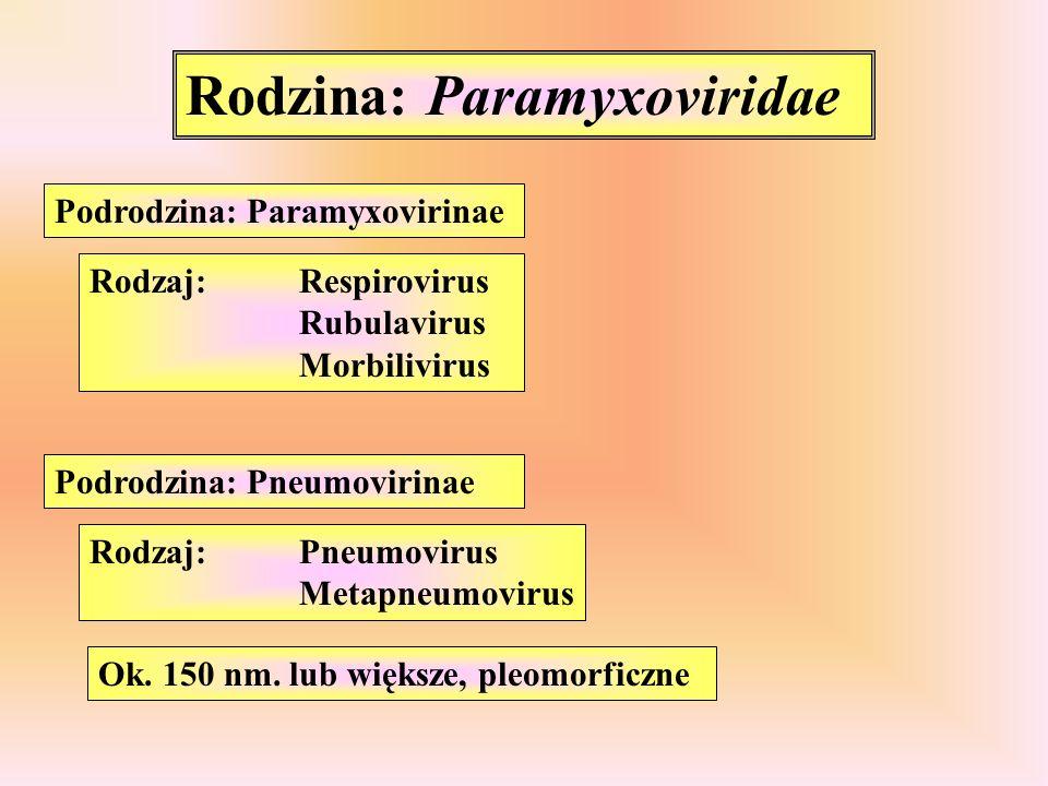 Rodzina: Paramyxoviridae