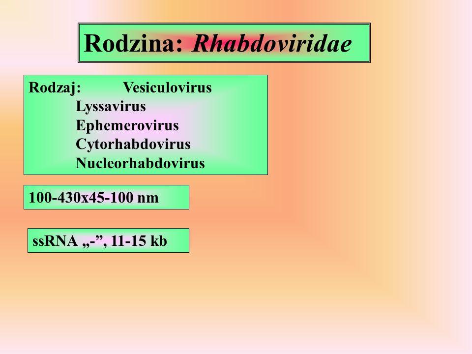 Rodzina: Rhabdoviridae