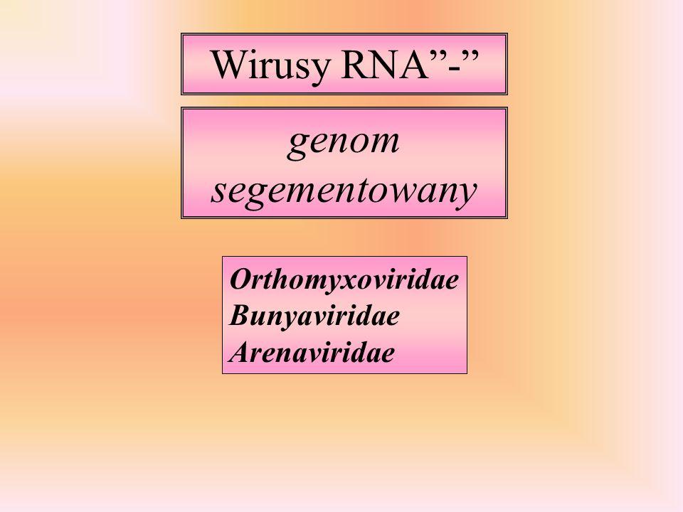 Wirusy RNA - genom segementowany