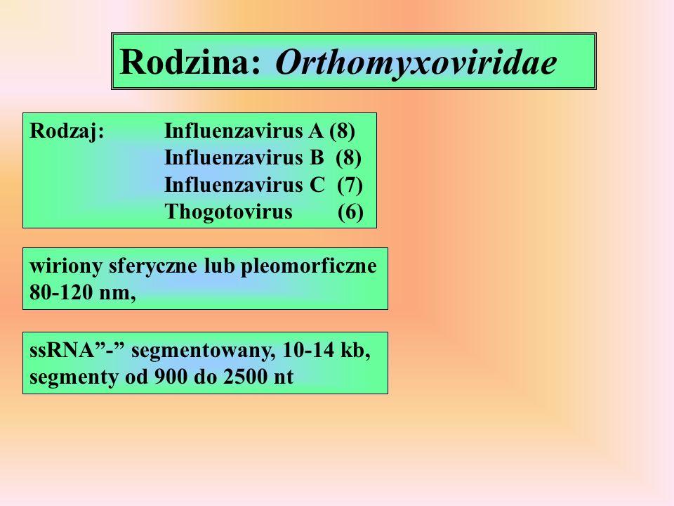 Rodzina: Orthomyxoviridae