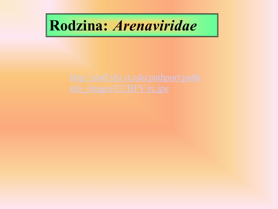 Rodzina: Arenaviridae