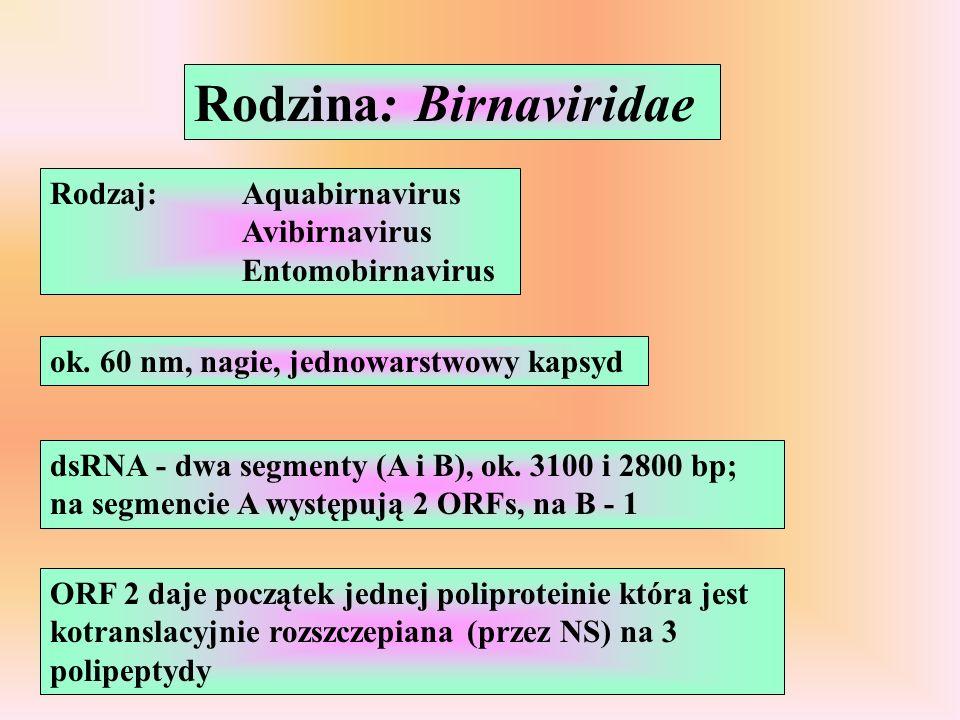 Rodzina: Birnaviridae