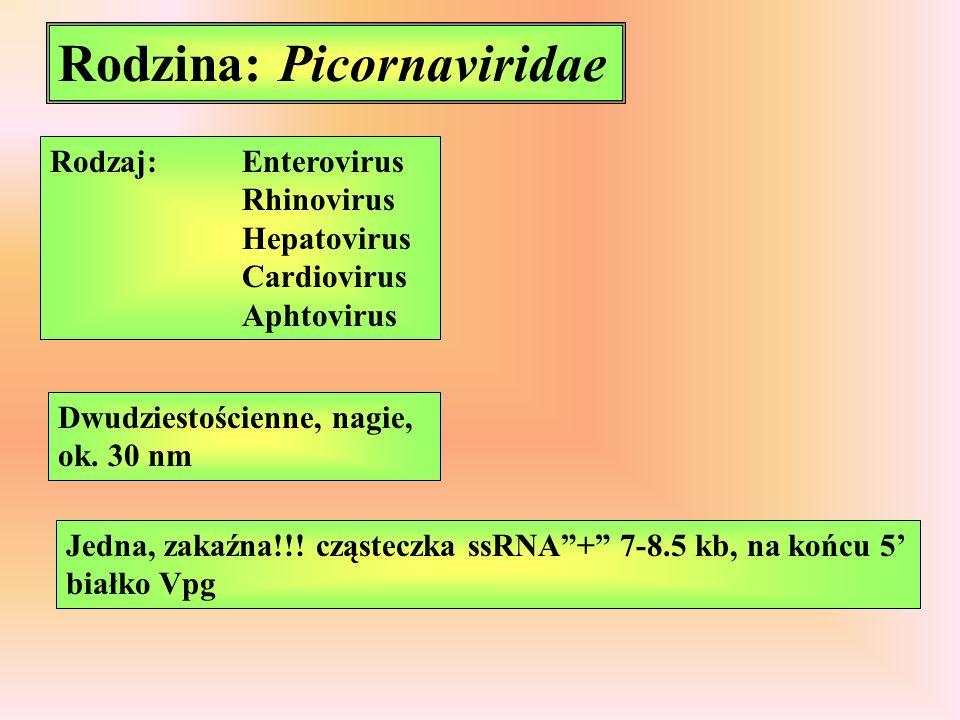 Rodzina: Picornaviridae
