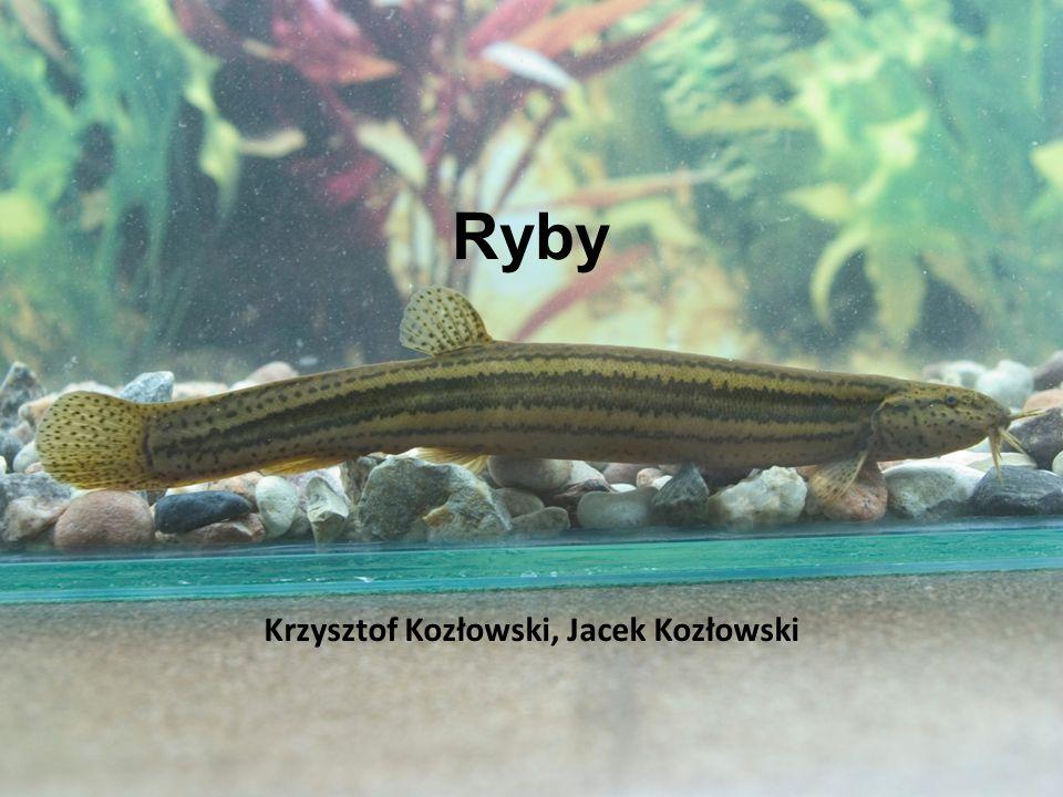 Krzysztof Kozłowski, Jacek Kozłowski