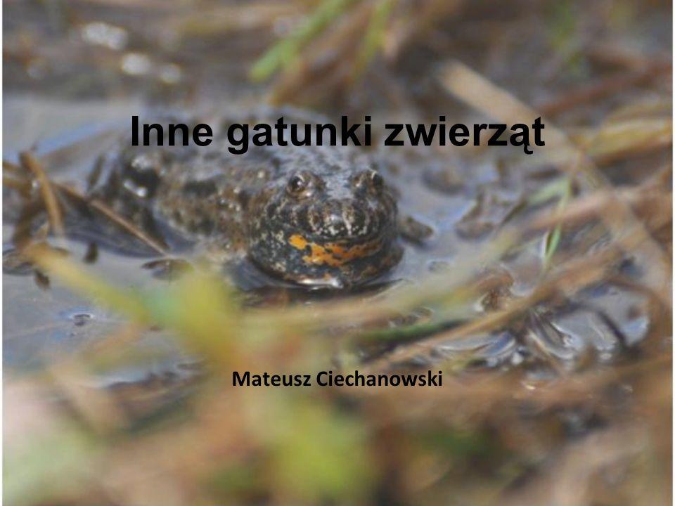 Inne gatunki zwierząt Mateusz Ciechanowski