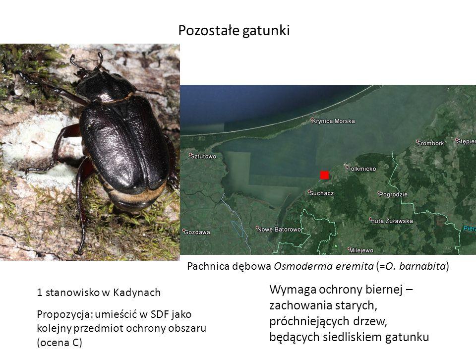 Pozostałe gatunki ♂ ♀ Pachnica dębowa Osmoderma eremita (=O. barnabita)