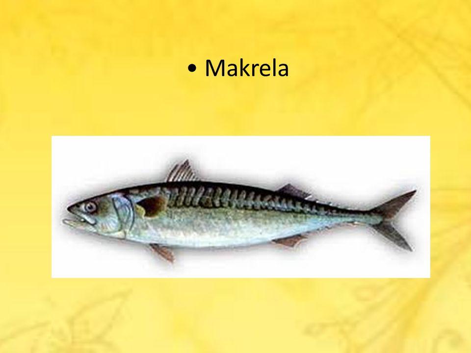 • Makrela