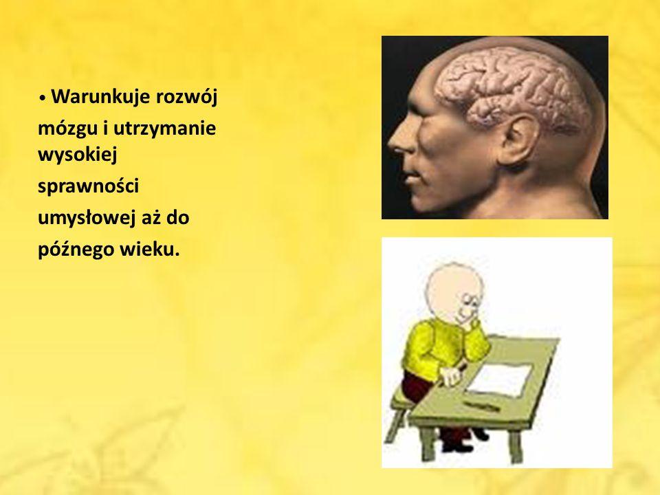 mózgu i utrzymanie wysokiej sprawności umysłowej aż do późnego wieku.