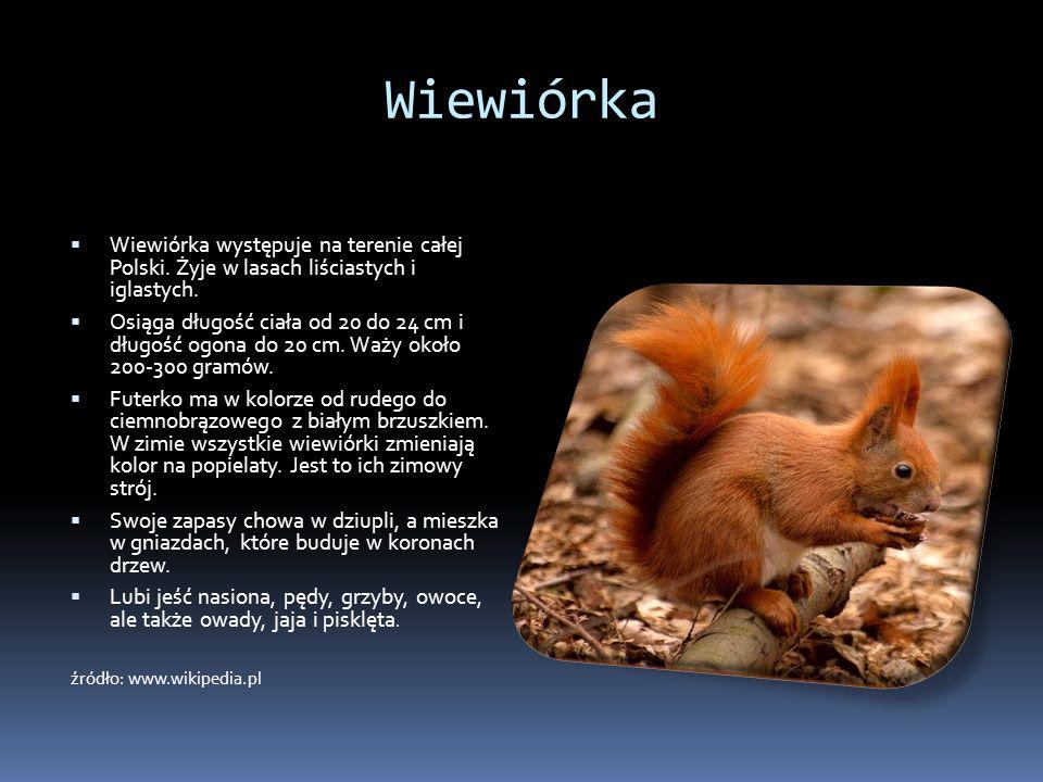 Wiewiórka Wiewiórka występuje na terenie całej Polski. Żyje w lasach liściastych i iglastych.