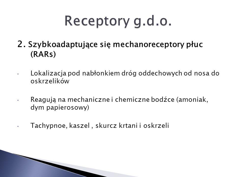 Receptory g.d.o. 2. Szybkoadaptujące się mechanoreceptory płuc (RARs)