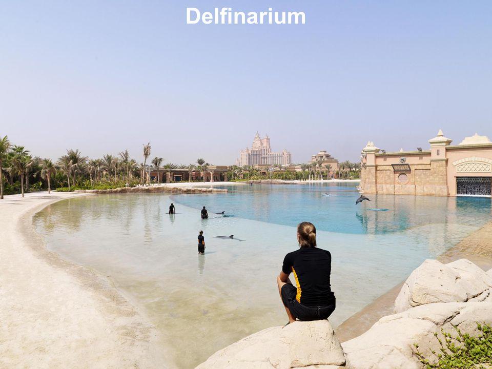 Delfinarium 43
