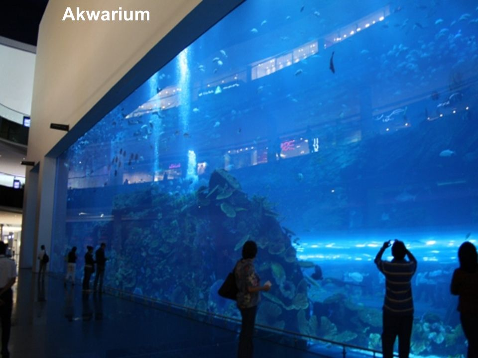 Akwarium 6