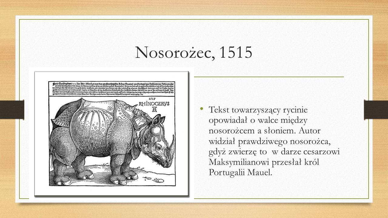 Nosorożec, 1515