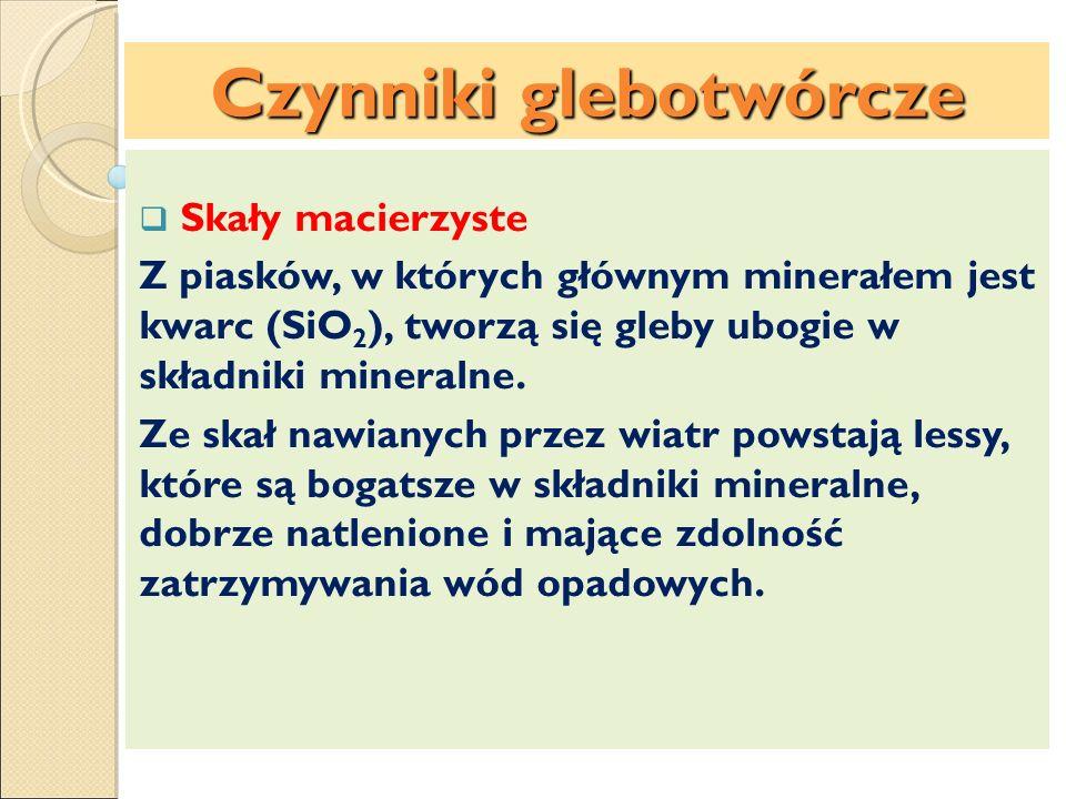 Czynniki glebotwórcze Czynniki glebotwórcze:
