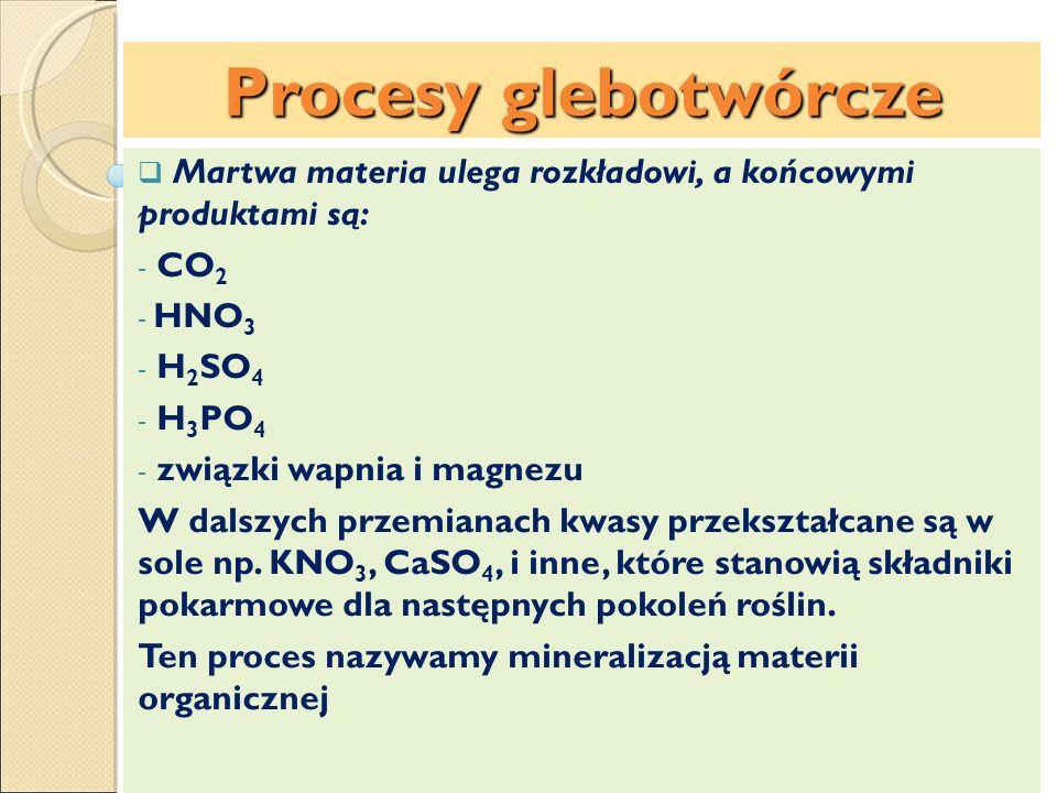 Procesy glebotwórcze Martwa materia ulega rozkładowi, a końcowymi produktami są: CO2. HNO3. H2SO4.