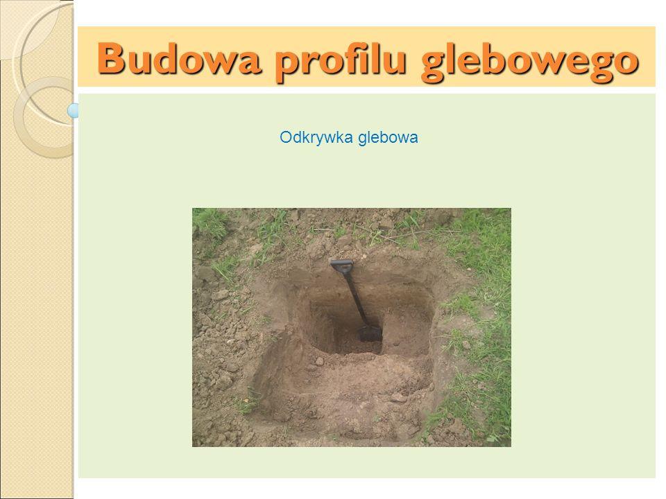 Budowa profilu glebowego